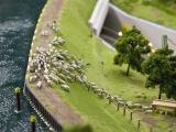 Schafsherde am Kanal